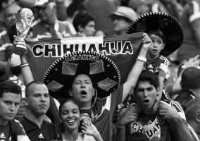 фото мексиканских чихуахуа (c)Reuters